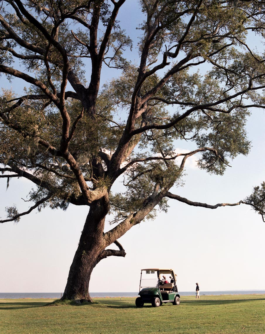 Hilton Head island gold cart with beautiful tree travel story