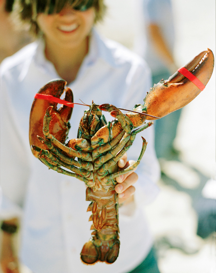 live lobster red white and blue Nantucket beach lobster bake